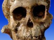 Selam (Australopithecus afarensis) or DIK 1-1