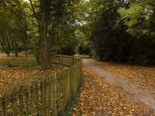 Leafy Pathway