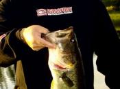 English: Largemouth Bass
