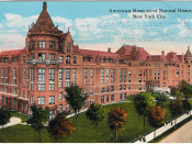 English: Glossy color postcard of the American Museum of Natural History, New York City. The back is difficult to read because of double-printing (the ink has seeped through to the front). Published by the American Art Publishing Co., New York City.