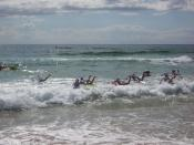 Board Race of the Nippers heading the open sea.