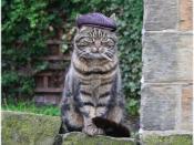 Shat Cat