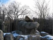 Franklin Park Zoo, Boston, January 2009