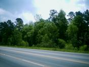 English: The Piney Woods viewed from Loop 390 outside of Marshall, Texas.