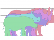 English: Rhino species size comparison Original text: Indian Rhinoceros, over 1.8m White Rhinoceros, 1.8m Black Rhinoceros, over 1.5m Javan Rhinoceros, 1.5m Sumatran Rhinoceros, 1.4m Comparison of rhino sizes (adult). Drawn by User:WikipedianProlific for