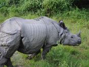 English: Rhinoceros in Bardiya Nepal