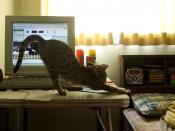 Kitten Abby 5