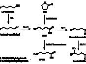 English: Metabolic pathways of gamma-hydroxybutyric acid Deutsch: Stoffwechselwege von GHB
