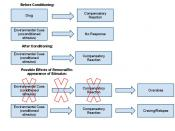 English: drug response in classical conditioning