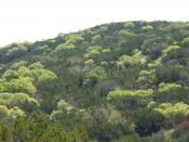 Deciduous annual trees put on new lightgreen leaves in Spring