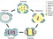 Nuclear envelope breakdown and reassembly in mitosis