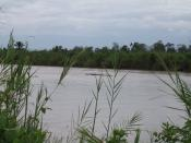 Hippopotami in the Ruzizi River in Burundi