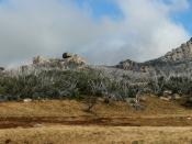 Panoramic view across the Mt Buffalo plateau. The highest peak on Mt Buffalo, The Horn at 1,723 m, is the white peak to image right approximately 3 km from the location of the camera (a walker's safety fence can be seen on top). The large number of dead t