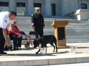 Fire Marshal Chris Brewster running K-9 Beth through scent discrimination drills