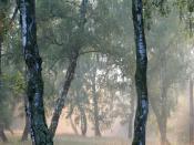 English: Nature Reserve Reci Magyar: Rétyi Nyír természetvédelmi terület Română: Rezervaţia naturală de la Reci