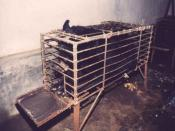 "A bile bear in a ""crush cage"" on Huizhou Farm, China. #Bile%20Bears Asian Animal Protection Network"