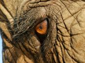 English: The eye of an asian elephant at Elephant Nature Park, Thailand Deutsch: Das Auge eines indischen Elefanten im Elephant Nature Park, Thailand