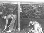 Miners digging coal