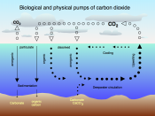 Air - sea exchange of carbon dioxide