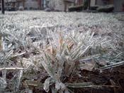 English: Ice glaze on grass, taken in Pennsylvania, USA during freezing rain on December 16, 2007