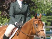 Horse and rider in hunt seat attire, USA