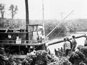 Loading bananas in a Nicaragua banana plantation