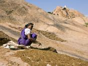 A woman putting up cow dung up to dry in the sun in the village of Tiruparankundram, 20 km away from Madurai, India.