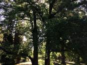 Haig Park, Braddon