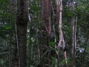 Daintree Rainforest. Photo taken June 2005. Uploaded with permission.