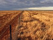 Drought on the Hay Plain.