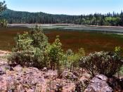 English: Photo of Boggs Lake vernal pool looking northward