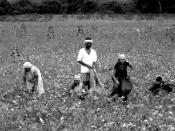 English: Workers tending crop fields off of the highway from Dharwad to Hampi.