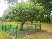 Isaac Newton apple tree, Babson College, 231 Forest Street, Wellesley, Massachusetts, USA.