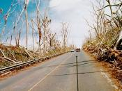 Wind damage to trees from Iniki