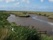 English: Tidal creek Looking over the outlet sluice from Stiffkey Fen. Water is released at low tide through a one-way outlet so that the fresh marsh is not flooded with salt water at high tide.