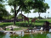 English: A view from Busch Gardens Africa's