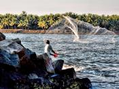 English: A fisherman in Kerala, India. A fisherman casting a net in Kerala, India.