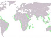 World Map of Mangrove distribution Français : Carte mondiale de la répartition géographique de la mangrove