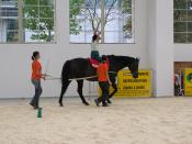 English: Therapeutic horse riding on the Medical fair Brno Česky: Ukázka hipoterapie na veletrhu HOSPIMedica v Brně