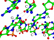 Structure showing the basepairing of 5'-GUC-3' to 3'-CAG-5'. Hydrogen atoms are omitted. This is a section of the structure of a 16 nucleotide siRNA bound to a Piwi protein, captured by X-ray crystallography. Carbon atoms are in green, oxygen in red, nitr