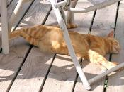 Toni-Lounging-on-Deck