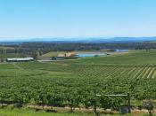 English: Hunter Valley Panorama, mfunnell, stitched from separate shots by the author on 19NOV2005. From memory, the shots were taken from near the Audrey Wilkinson winery. Category:Wine-related images