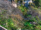 萬古挺立 (万古挺立) / 山東省泰山 山东省泰山 Mount Tai, Shandong Province / 中國旅遊 中国旅游 China Tourism / SML.20121011.7D.09496.PS.C23