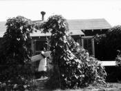 Woman carries a board in the front yard of a Delta Cooperative house with vines trained over an entry arch