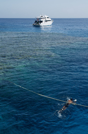English: A boat is moored to the coral reef in the Red Sea, near Hurghada.