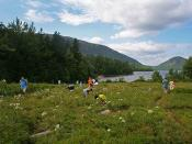 blueberry hunt near jordan pond