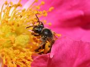 Insects collecting nectar unintentionally transfer pollen to other flowers, causing pollination