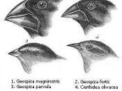Darwin's finches or Galapagos finches. Darwin, 1845. Journal of researches into the natural history and geology of the countries visited during the voyage of H.M.S. Beagle round the world, under the Command of Capt. Fitz Roy, R.N. 2d edition. 1. (category