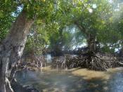 English: Mangroves, Papua New Guinea