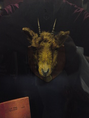 English: The preserved head of Billy the Goat, the mascot of Manchester United Football Club from 1905 to 1909, when he died from alcohol poisoning following the club's victory in the 1909 FA Cup Final